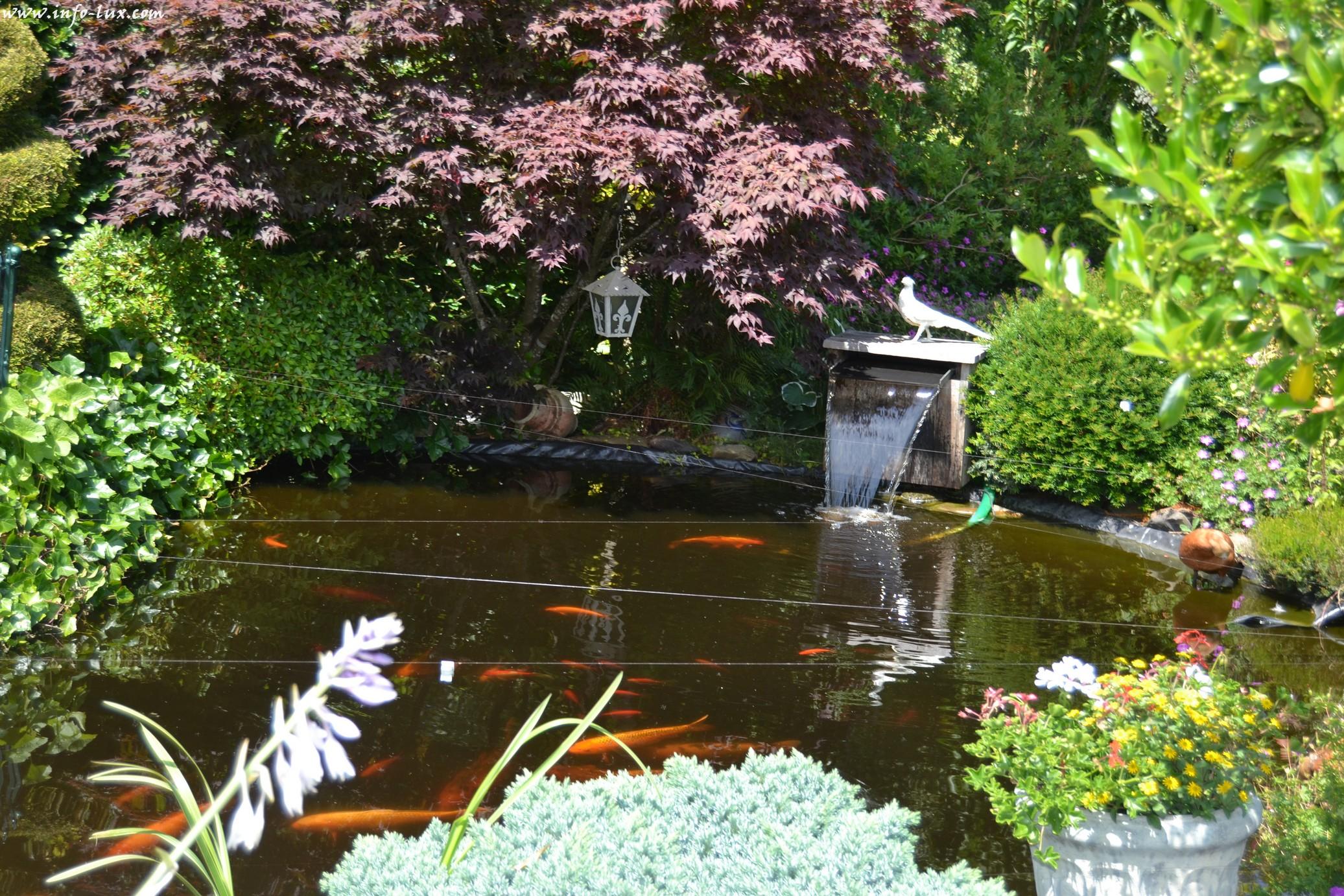 images/stories/PHOTOSREP/neufchateau/jardin1/Jardinen0006