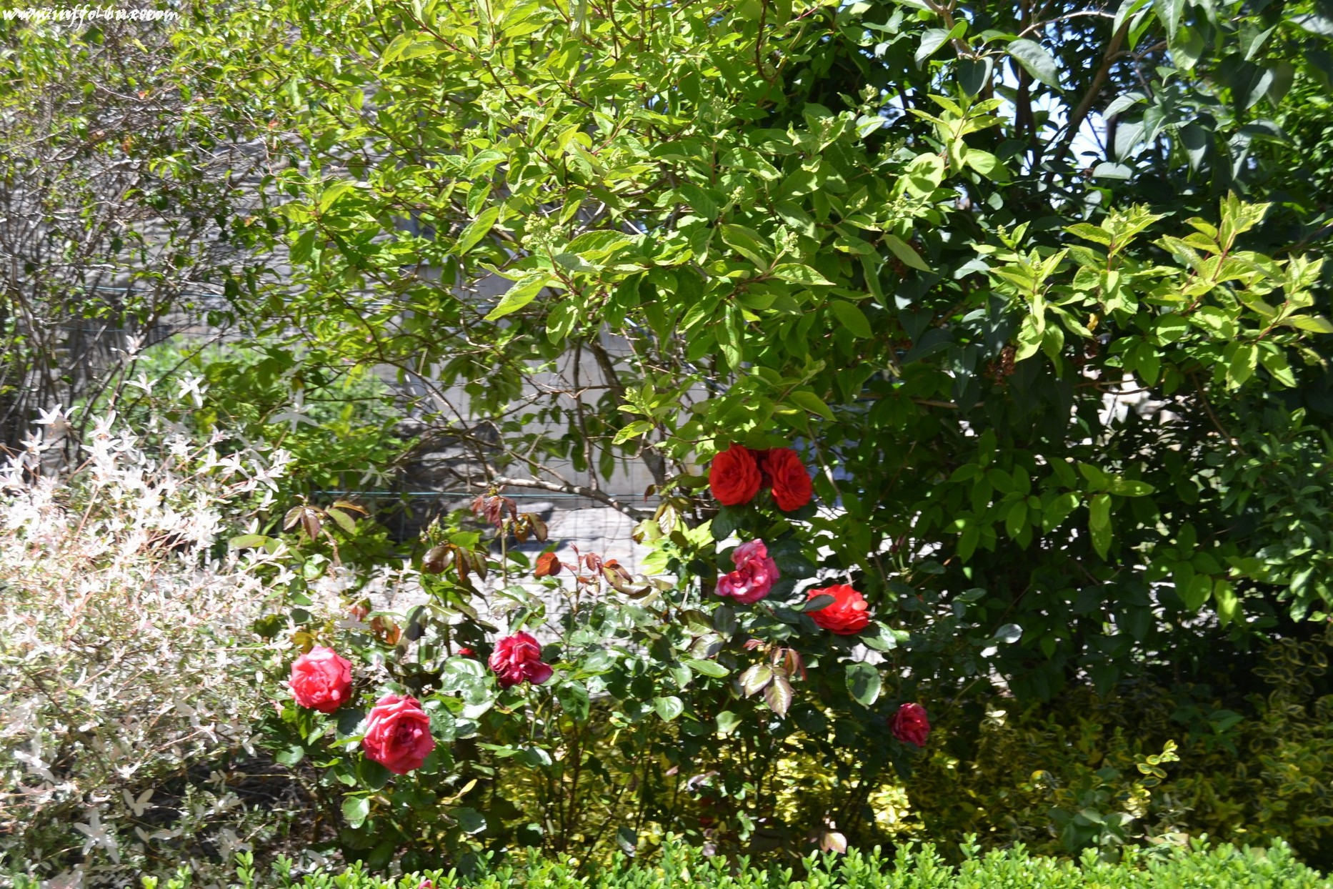 images/stories/PHOTOSREP/neufchateau/jardin1/aJardinen0002