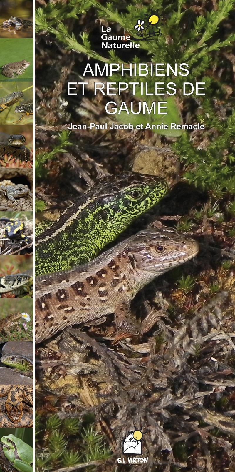 Les amphibiens et reptiles de Gaume, un livre, une expositionà Virton