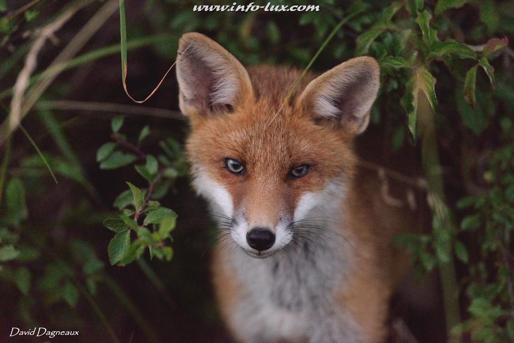 Dagneaux David  Portrait d'un photographe animalier