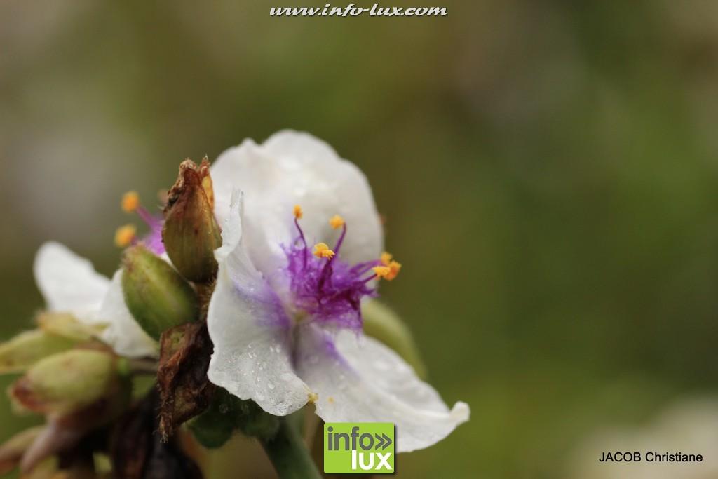 images/stories/PHOTOSREP/2016Juin/jardinboullion/jardin053