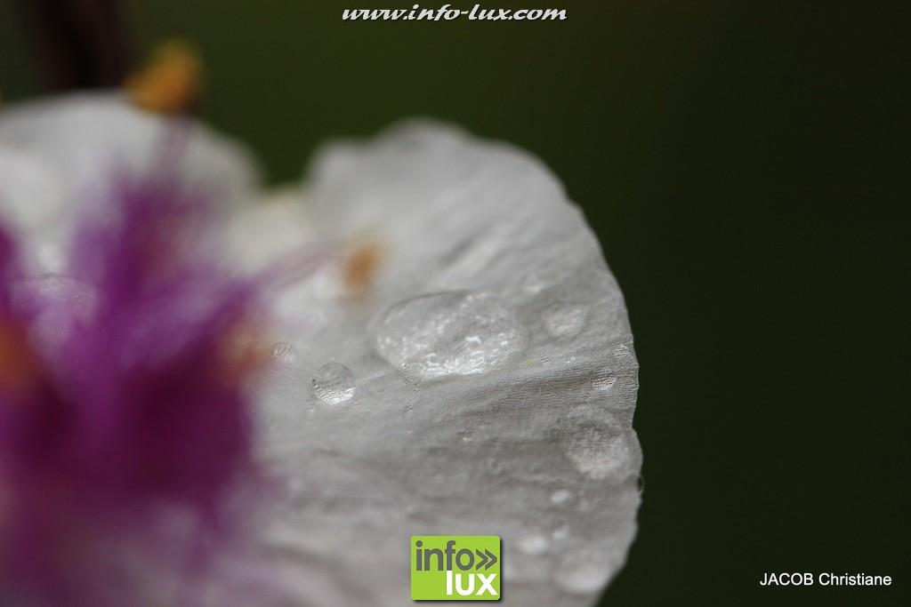 images/stories/PHOTOSREP/2016Juin/jardinboullion/jardin054