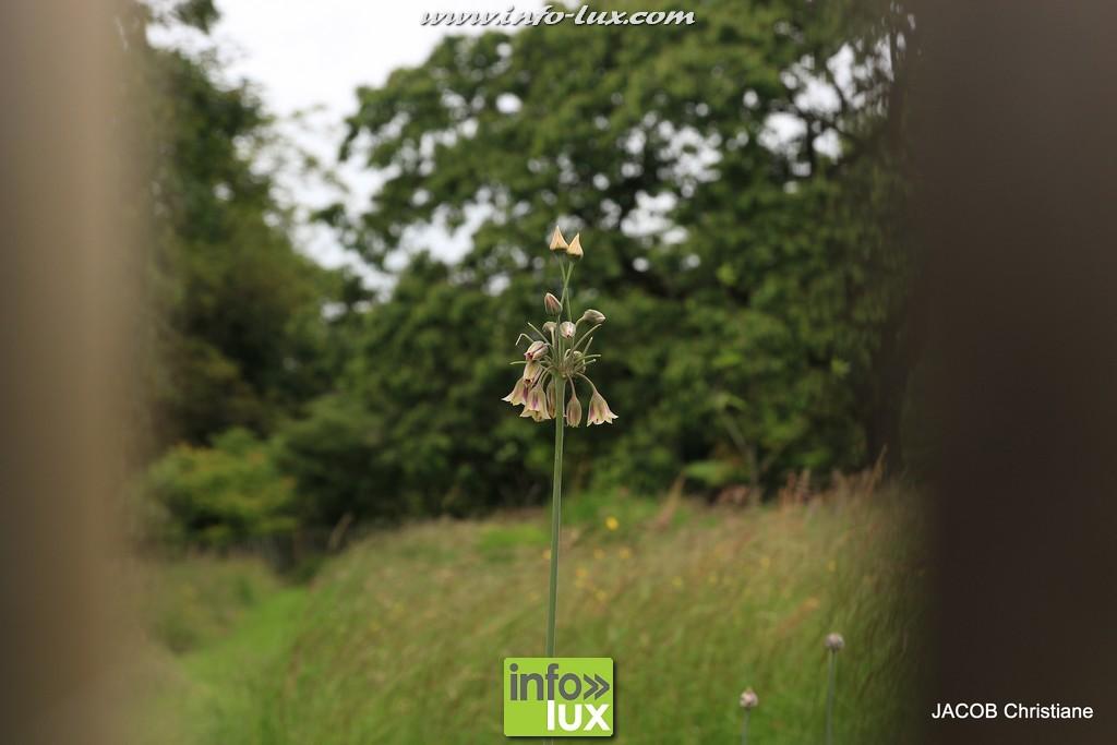 images/stories/PHOTOSREP/2016Juin/jardinboullion/jardin071