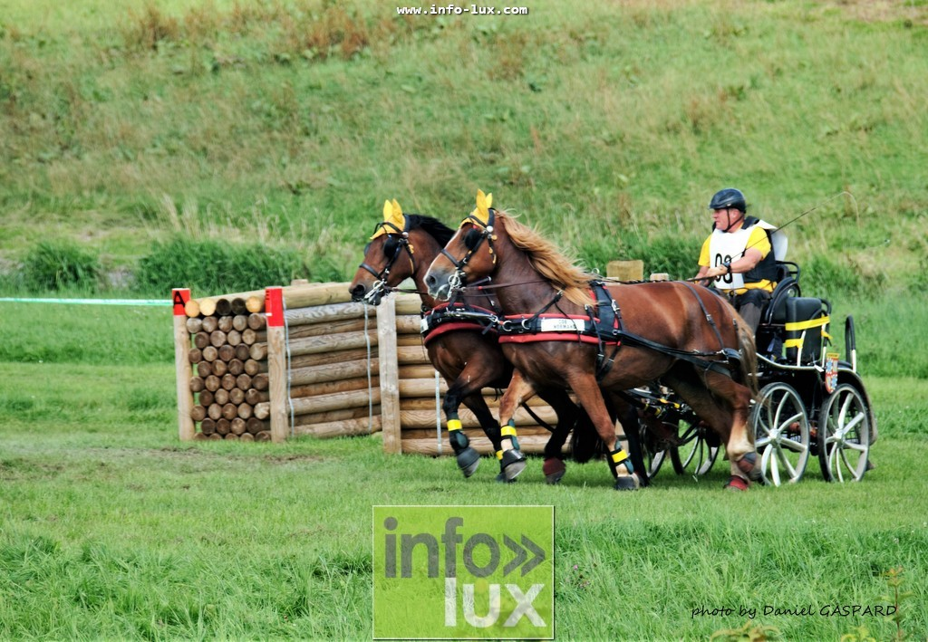images/2017cheval1/infolux00002