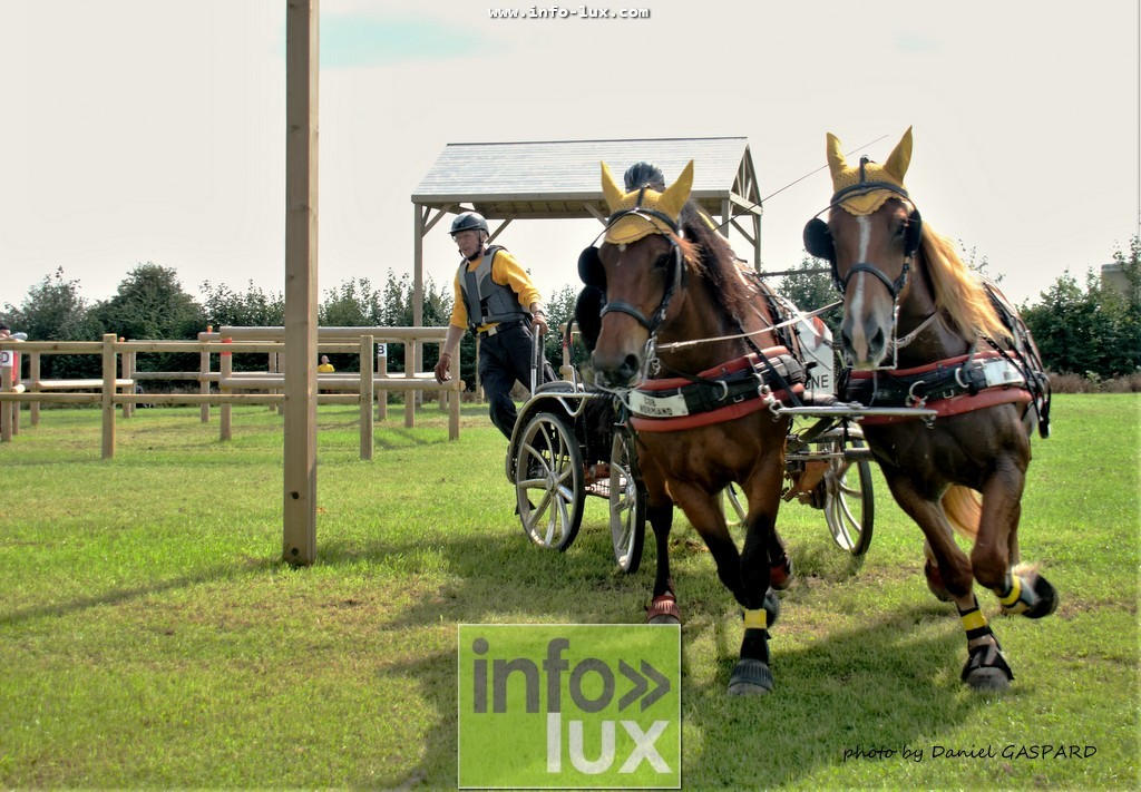 images/2017cheval1/infolux00003