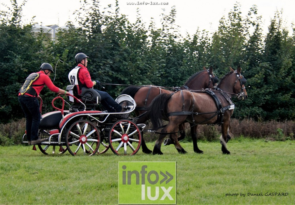 images/2017cheval1/infolux00004