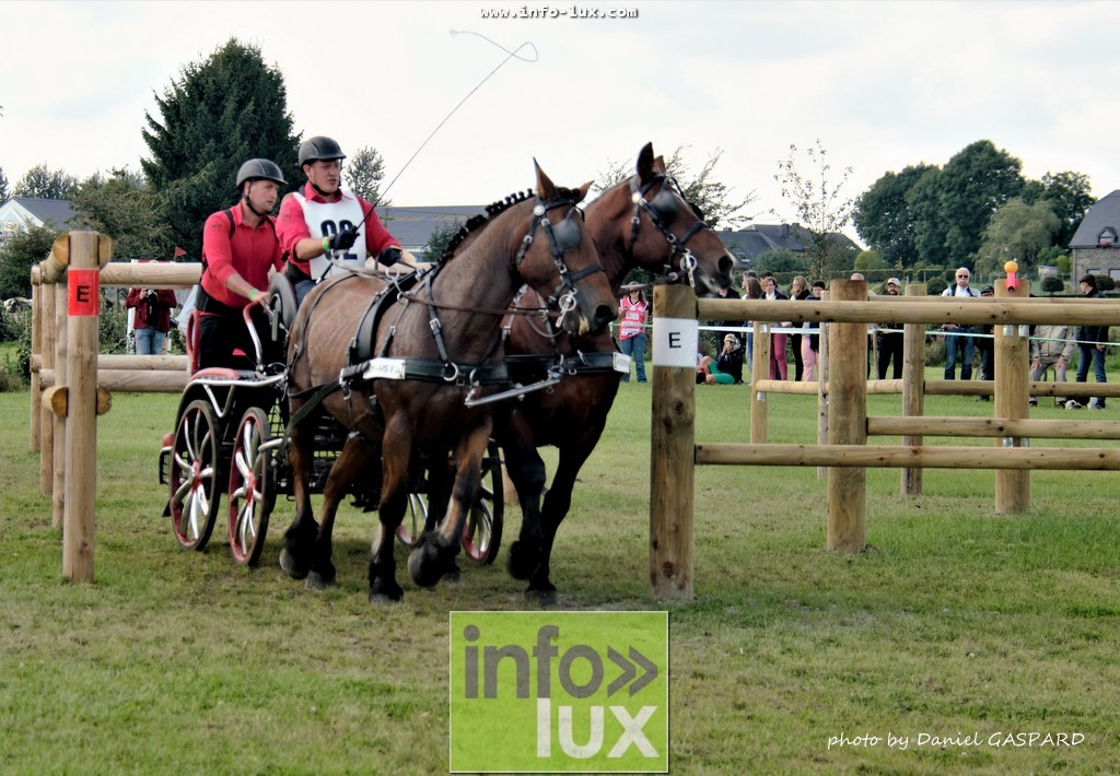 images/2017cheval1/infolux00005