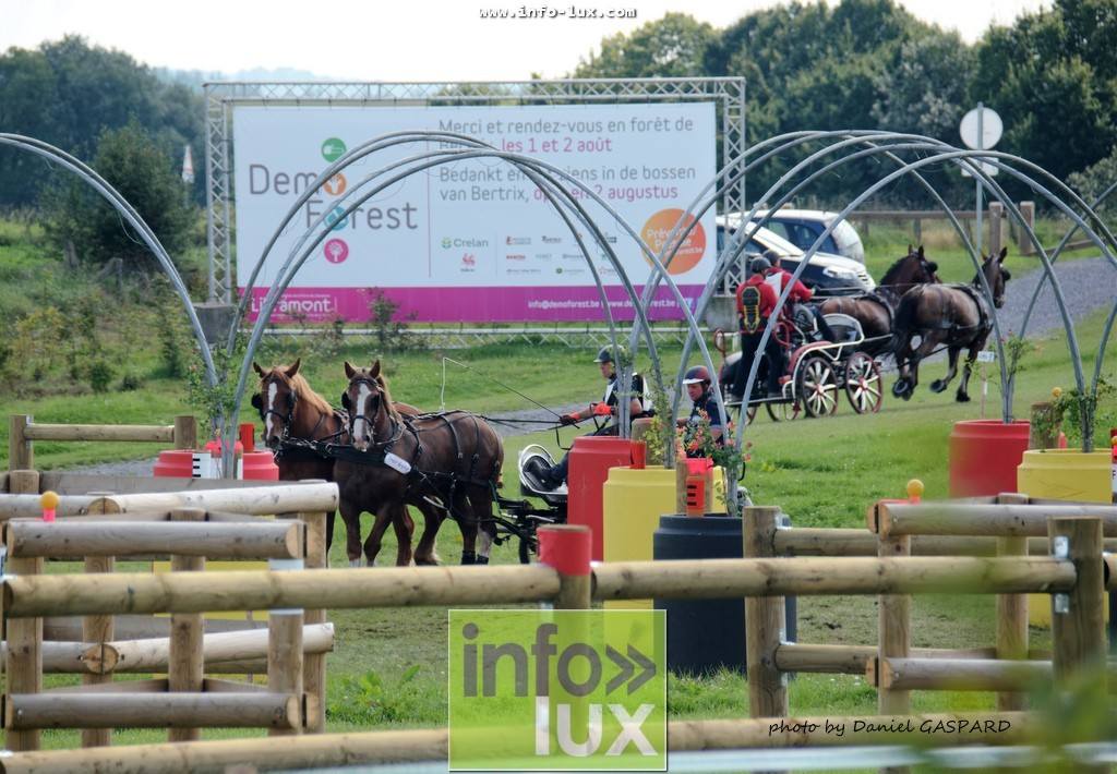 images/2017cheval1/infolux00006