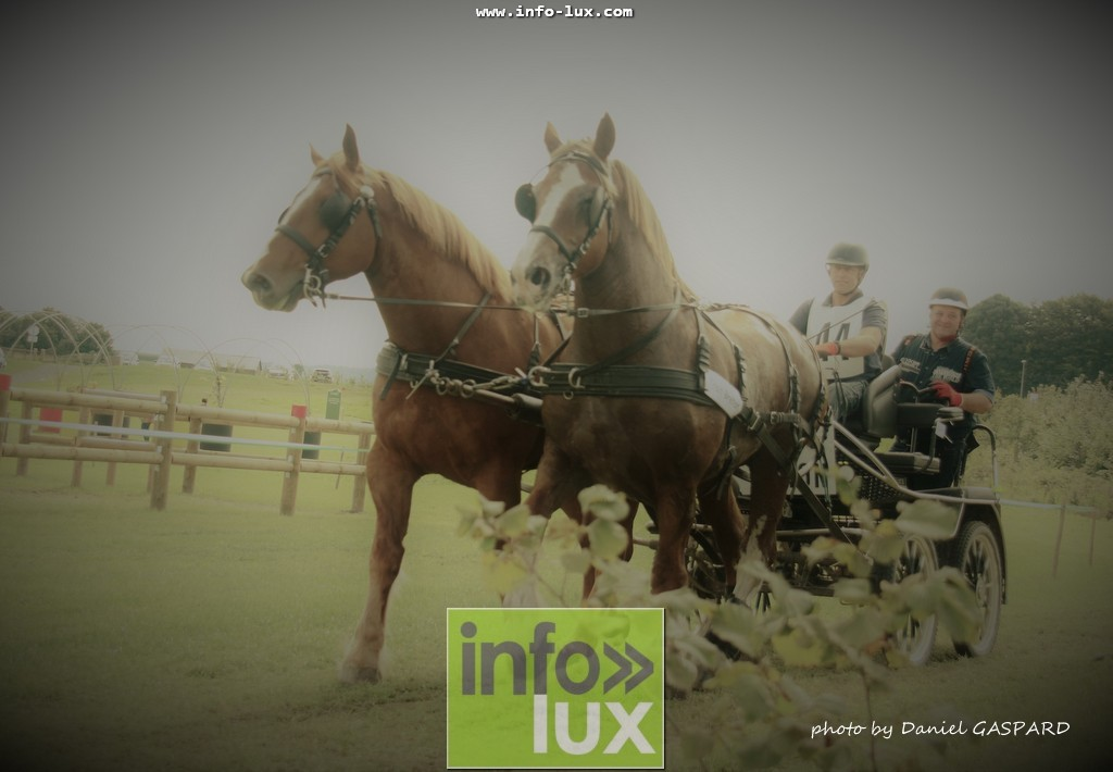 images/2017cheval1/infolux00007