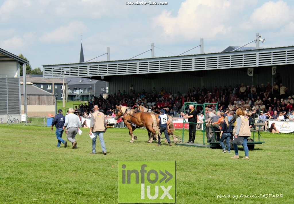 images/2017cheval1/infolux00013