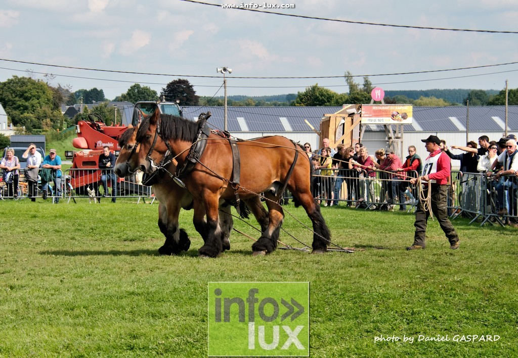 images/2017cheval1/infolux00014