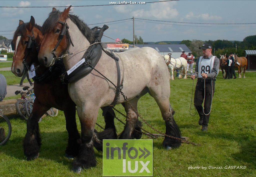 images/2017cheval1/infolux00016