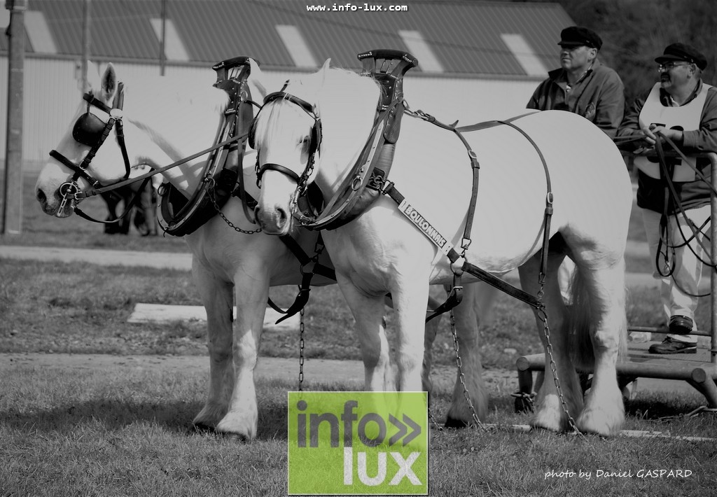 images/2017cheval1/infolux00019