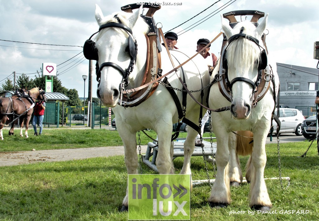 images/2017cheval1/infolux00020