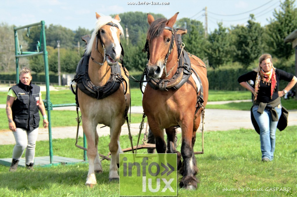 images/2017cheval1/infolux00022