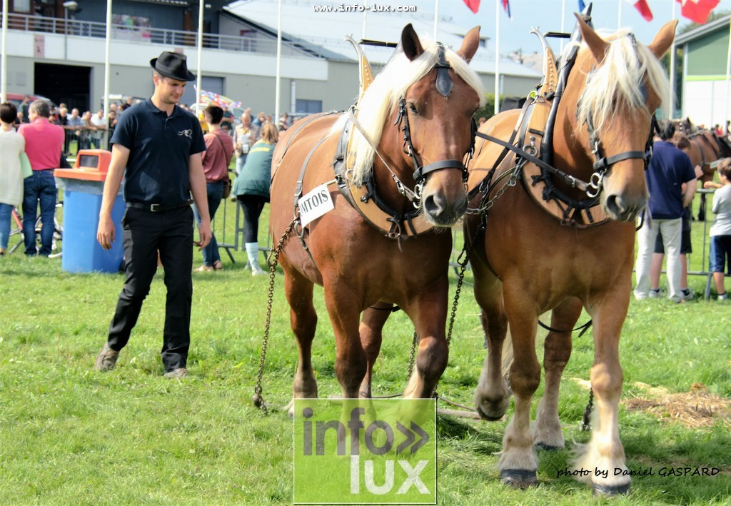 images/2017cheval1/infolux00023