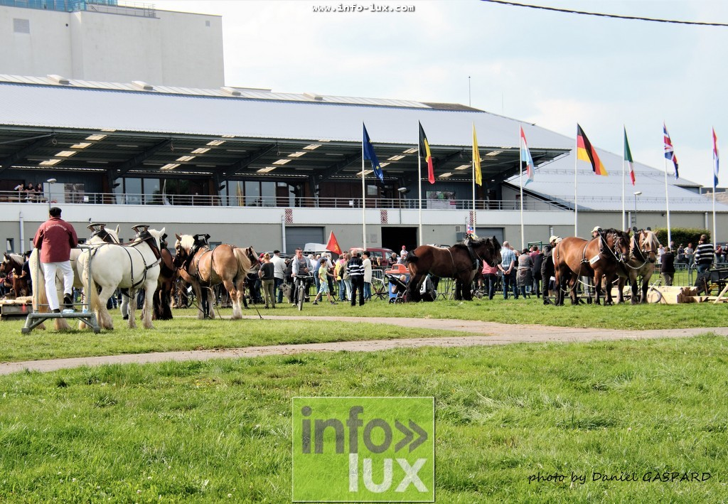 images/2017cheval1/infolux00024