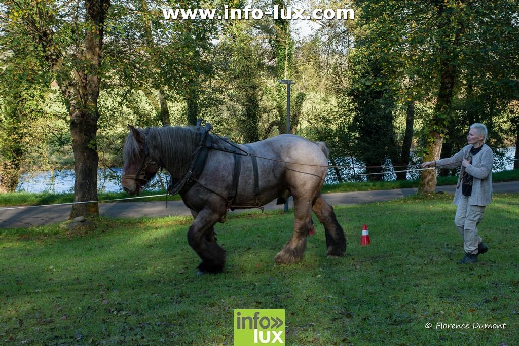 //media/jw_sigpro/users/0000001510/fete de la pomme de terre florenville/DSC_9619