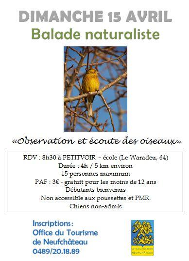 Balade naturaliste à Neufchateau
