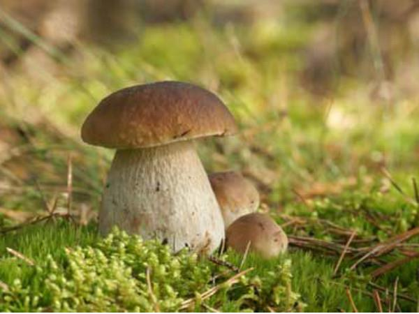 Balades champignons à Chiny