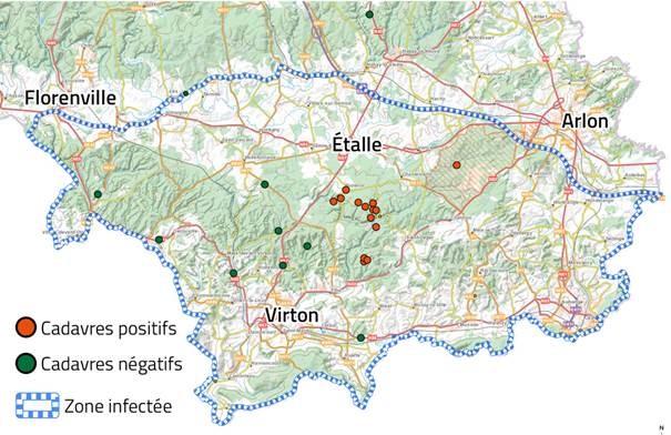 la Peste Porcine Africaine : L'espace positif est désormais élargi sur une zone comprenant Buzenol, Ethe, Lagland et St-Léger.