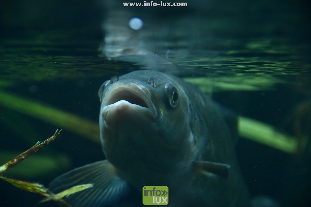 A Hotton, entre Durbuy et La Roche, une exposition sur nos poissons