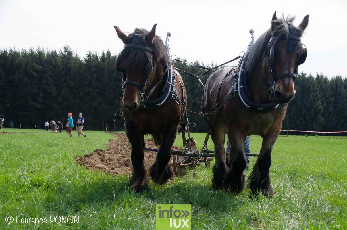 Le cheval de trait dans nos bois en province de Luxembourg.