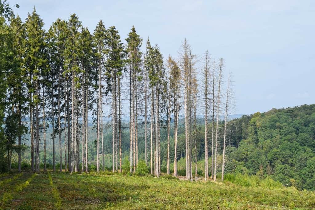 Réouverture des forêts gaumaises  sous Conditions …