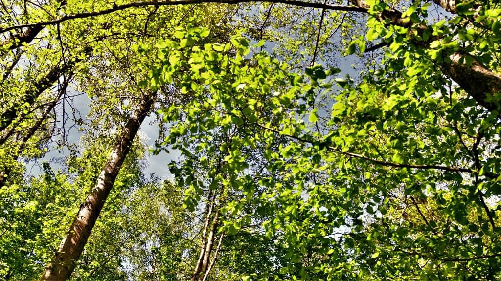 Réouverture de la forêt en Gaume
