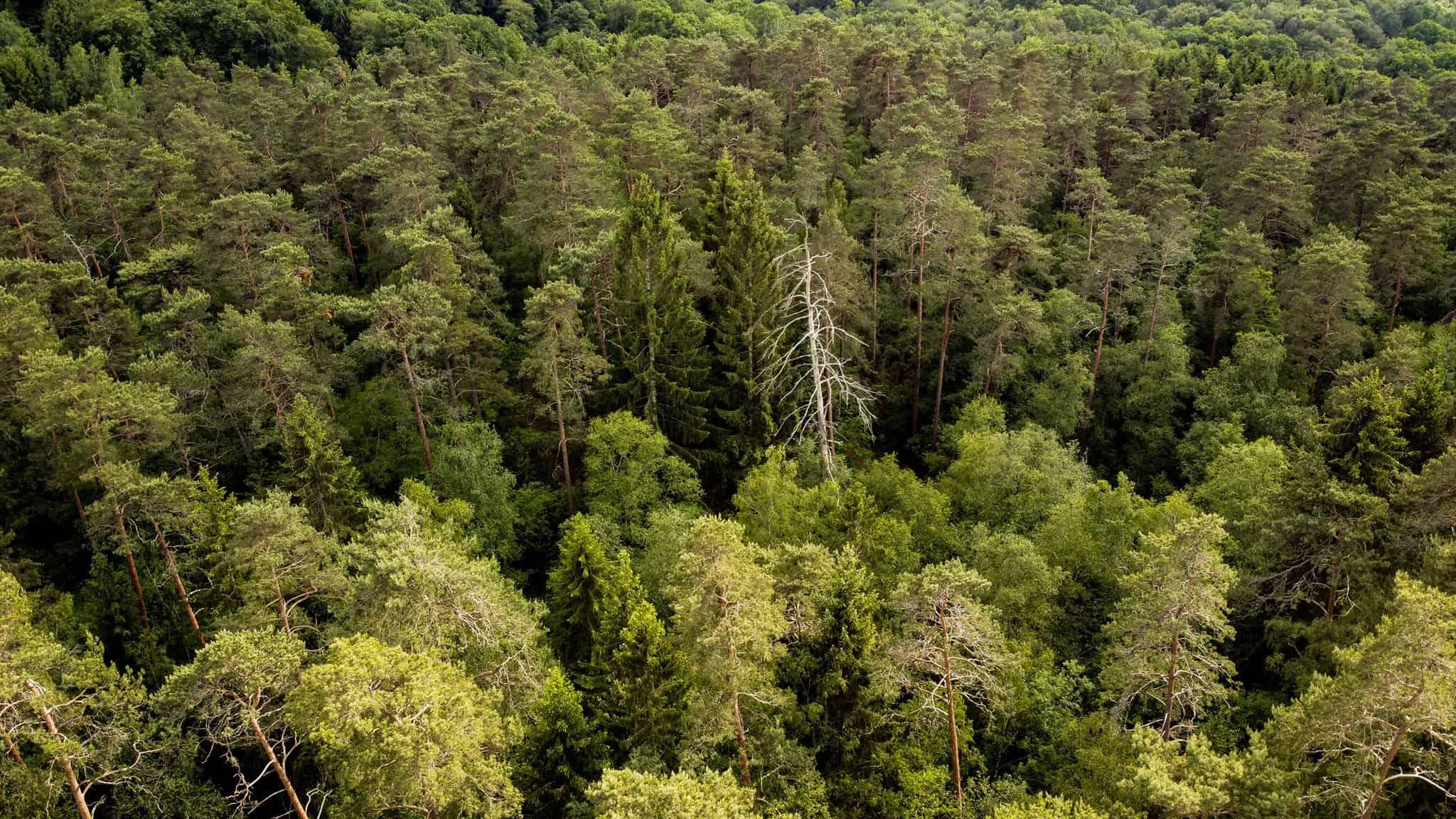 un million d'arbreset 4000 km de haies