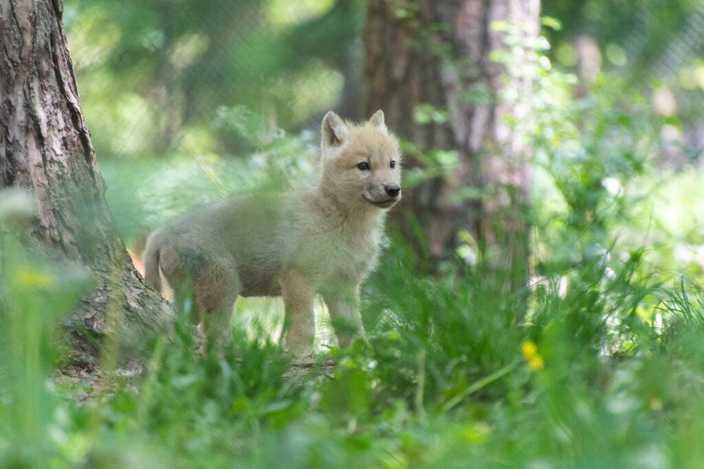 naissances se suivent dans le Parc Animalier du Domaine des Grottes de Han