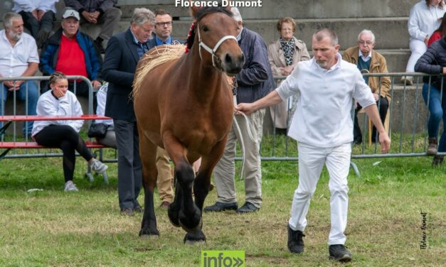 Cheval de trait Ardennais à Libramont