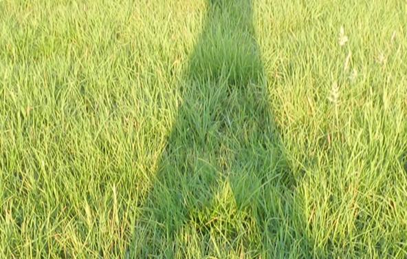 ANlier :  Feldenkrais au jardin